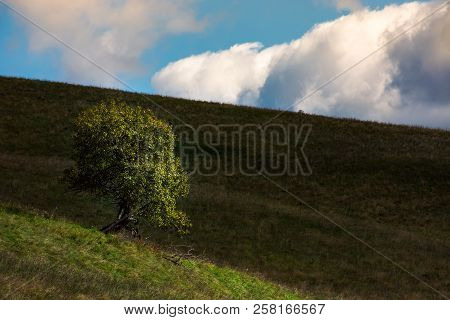 Lonely Tree On Hill Side On A Cloudy Autumn Day. Lovely Natural Background