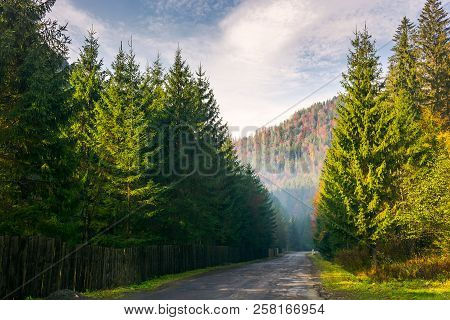 Road Through Deep Spruce Forest. Some Haze In The Distance. Lovely Autumn Scenery In Mountains. Wond