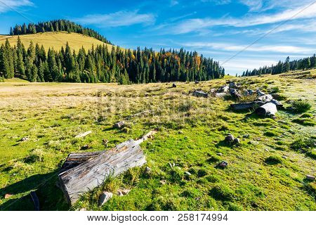 Log On A Grassy Hill In Apuseni Natural Park. Spruce Forest In The Distance. Beautiful Autumn Landsc