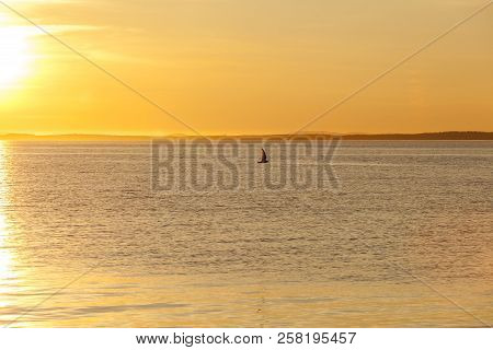 Seagull silhouette above the sea at colorful sunset. Concept of harmony and tranquility.