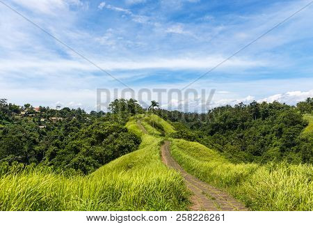 Famous Campuhan Ridge Walk In Ubud, Bali, Indonesia