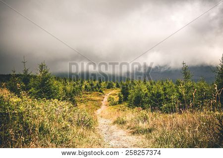 Trail On A Hill With Pine Trees Under A Large Misty Cloud In The Summer