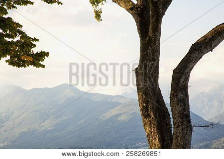 Tree Over Mountains Landscape