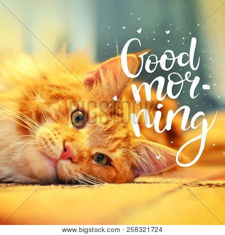 The Concept Is Good Morning. A Beautiful Red Cat Woke Up Early In The Morning. The Inscription On Th