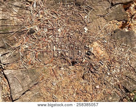 The Earth, Spruce Natural Brown Pine Cones And Casting Molds And Copy The Place In The Coniferous Fo