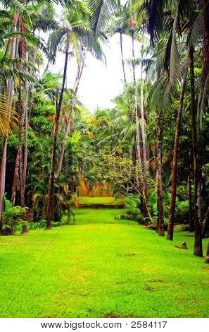 Tropical Garden With Palm Trees And Rendered Under Hdr