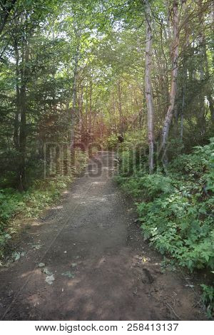Beautiful walking trail with sun in the trees and green foliage