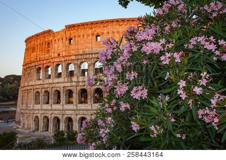 Flowers In Front Of The Colosseum In Rome