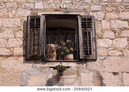 Split Croatia dog in window