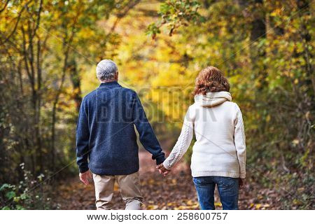 A Rear View Of A Senior Couple Walking In An Autumn Nature.