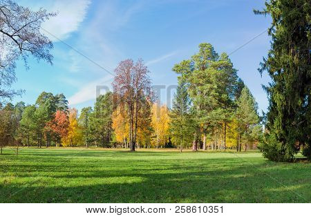 Large Glade In The Park, Covered Grass Among A Conifers And Deciduous Trees In Autumn Day