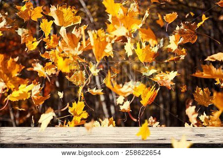 Autumn Leaves Fall And Wooden Table. Beauty Nature Background