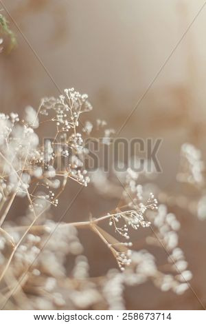 Abstract Texture Of A Dried Flowering Branch, With A Shallow Depth Of Field, A Delicate Texture