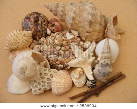 A Shell Shrine
