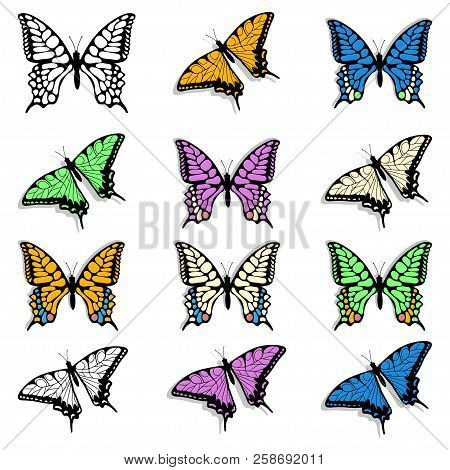 Hand Drawn Of Butterfly. ?olored Insects. Butterfly Logo. Wildlife. Realistic Colorful Butterflies.