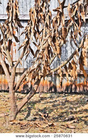Tree Die