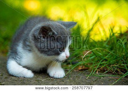 Portrait Of A Beautiful Little Kitten Outdoor.
