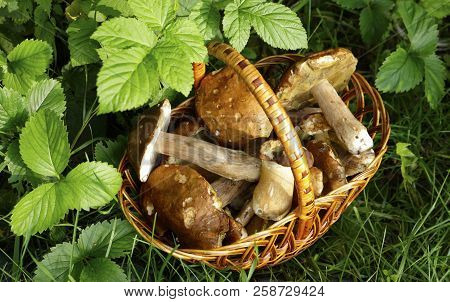 White Mushrooms In A Basket