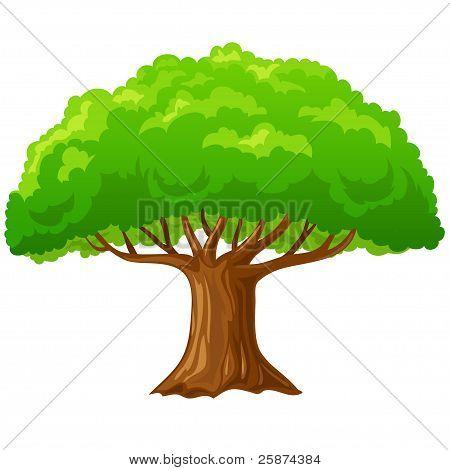 Cartoon Big Green Tree Isolated On White.