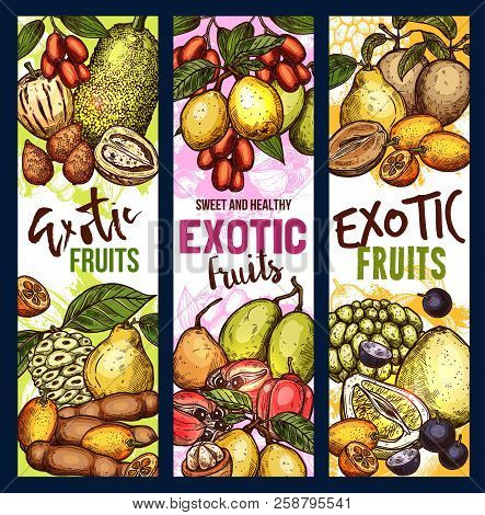 Exotic Fruit Sketch Sweet Food. Tropical Pomelo, Kumquat And Quince, Jackfruit, Ackee And Tamarind,