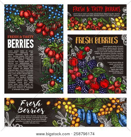 Cherry, Blackberry And Cranberry, Blueberry, Rowanberry And Barberry, Honeysuckle, Buckthorn And Jun