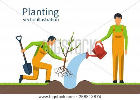 Planting Tree. Gardener With Shovel And Watering Can Hold In Hand. Process Planting Concept. Gardeni