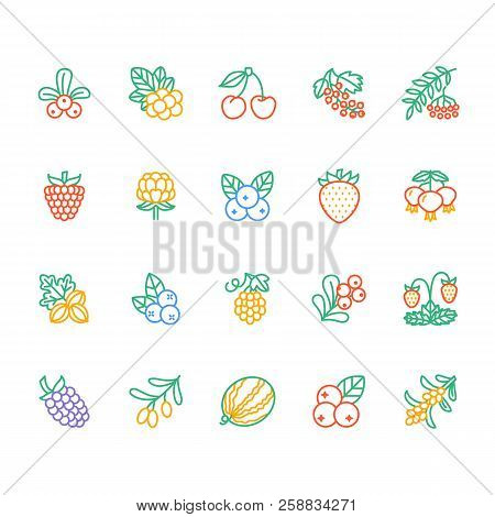 Forest Berries Colored Flat Line Icons - Blueberry, Cranberry, Raspberry, Strawberry, Cherry, Rowan