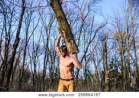 Lumberjack Or Woodman Sexy Naked Muscular Torso Gathering Wood. Man Brutal Sexy Lumberjack Carry Big