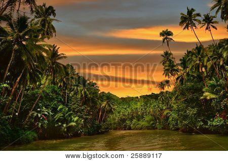 Rainforest river cruise in sunset light