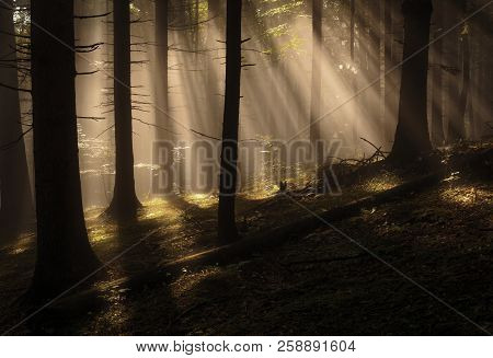 Sun Rays In Woods.