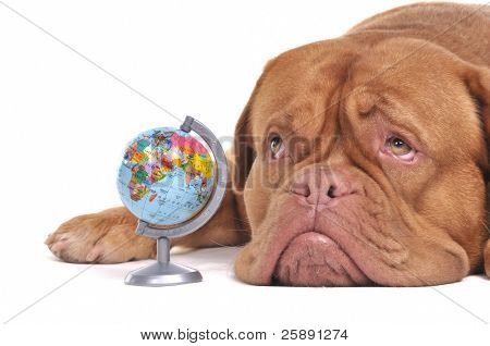 Puppy with globe is thinking of Far-off Destinations