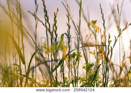 Summer Flowers On The Meadow. Wildflower Meadow, Flower Meadow, Wildflowers Close Up