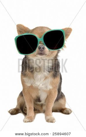 Funny dog with glasses isolated