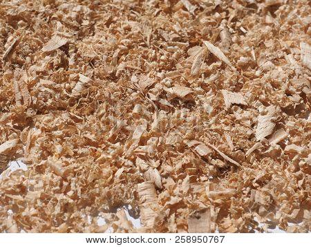 Sawdust Wood Dust