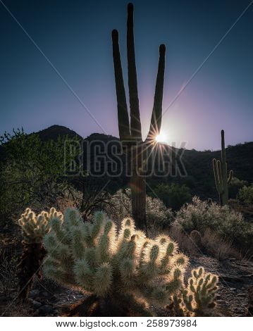 Hiked up the gateway trail to capture this sunburst sunrise shot through the sonoran cactus poster