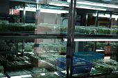 tissue culture technology in laboratory. plant cell growing on nutrient medium poster