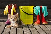 Small dog lying at sunny veranda near items for cleaning and rubber boots poster