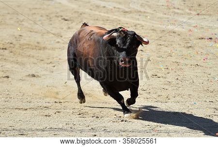 A Strong Bull With Bg Horns Running In Spanish Bullring