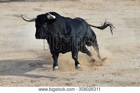 A Bravery Bull With Big Horns On Spanish Bullring