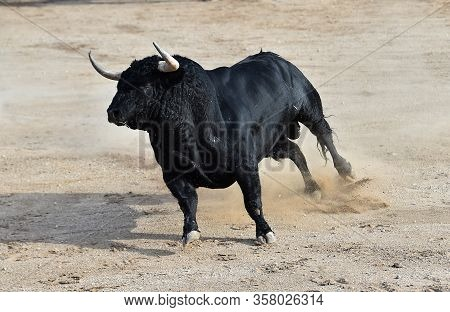 A Bravery Bull With Big Horns On Spain