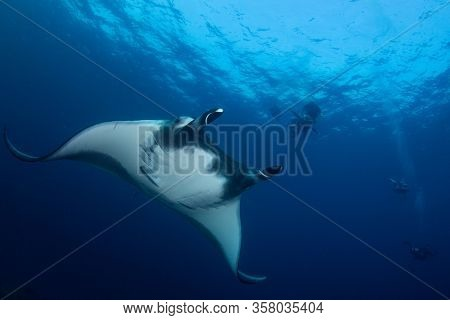 Ocean Manta Ray and scuba divers