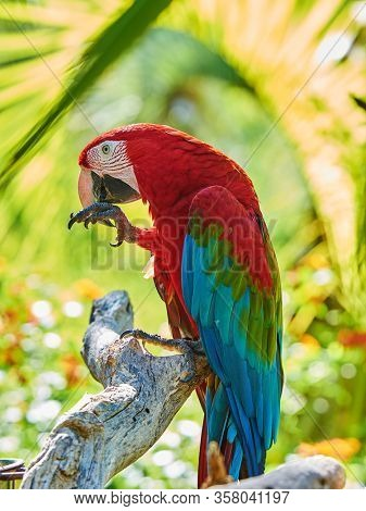 red macaw sitting on branch