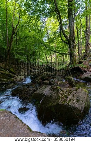 Water Stream In The Beech Forest. Beautiful Nature Scenery In Spring, Trees In Fresh Green Foliage.