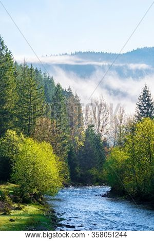 Mountain River On A Misty Sunrise. Stunning Nature Scenery With Fog Rolling Above The Trees In Fresh