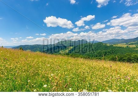 Summer Scenery Of Mountainous Countryside. Alpine Hay Fields With Wild Herbs On Rolling Hills At Hig
