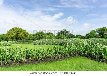 Greenery Garden With Geometric Shape Of Bush And Shrub, Decoration Flowering Plant Blooming On Green