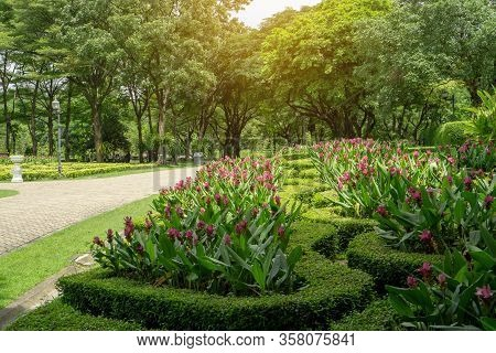 Pattern Of Topiary English Garden Style,  Siam Tulip Colorful Flowering Plant Blooming In A Green Le