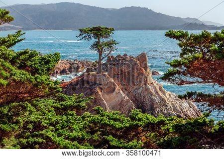 Pebble Beach, California/usa - October 28, 2019: Beautiful Lone Cypress Tree (monterey Cypress) On 1
