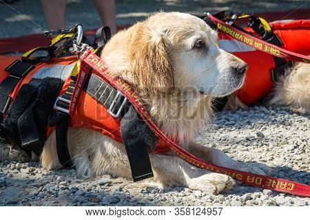 Lifeguard Dog, Rescue Demonstration With The Dogs In The Water. Translation Of The Italian Text On T