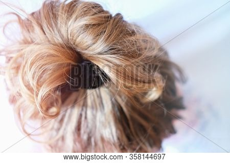 Messy Bun On The Head Of A Blonde Woman. Slightly Curly Hair. Modern Fast Hairstyle Messy Hair. Bad